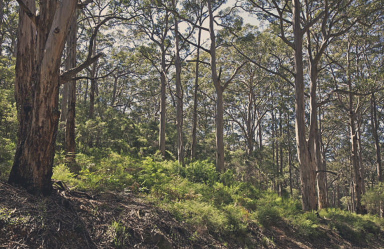 istock_forest 3_GRADED